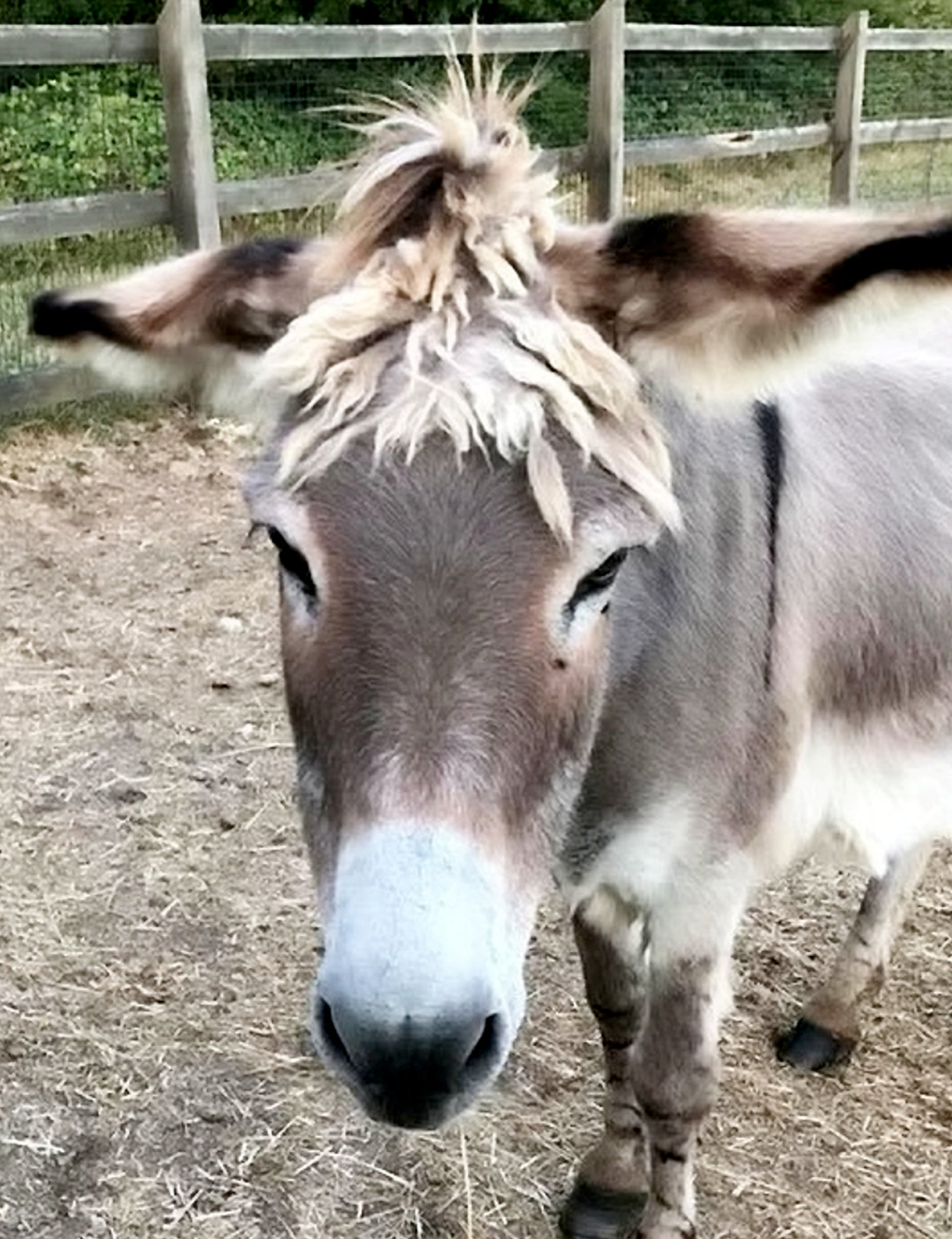 Donkey that retired after giving children rides for 20 years is