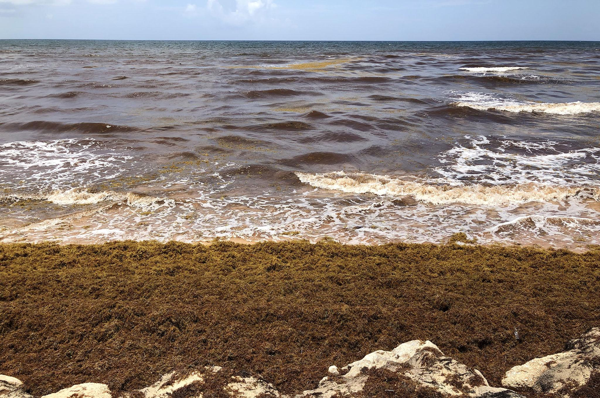 Climate change blamed as huge mounds of rotten seaweed spoil