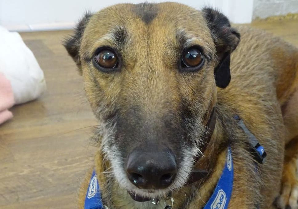 RSPCA's 'loneliest dog' who spent more than 500 days in kennels