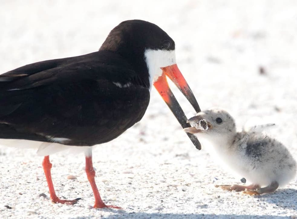 The photograph of the bird trying to feed its chick on a cigarette butt was described as heartbreaking