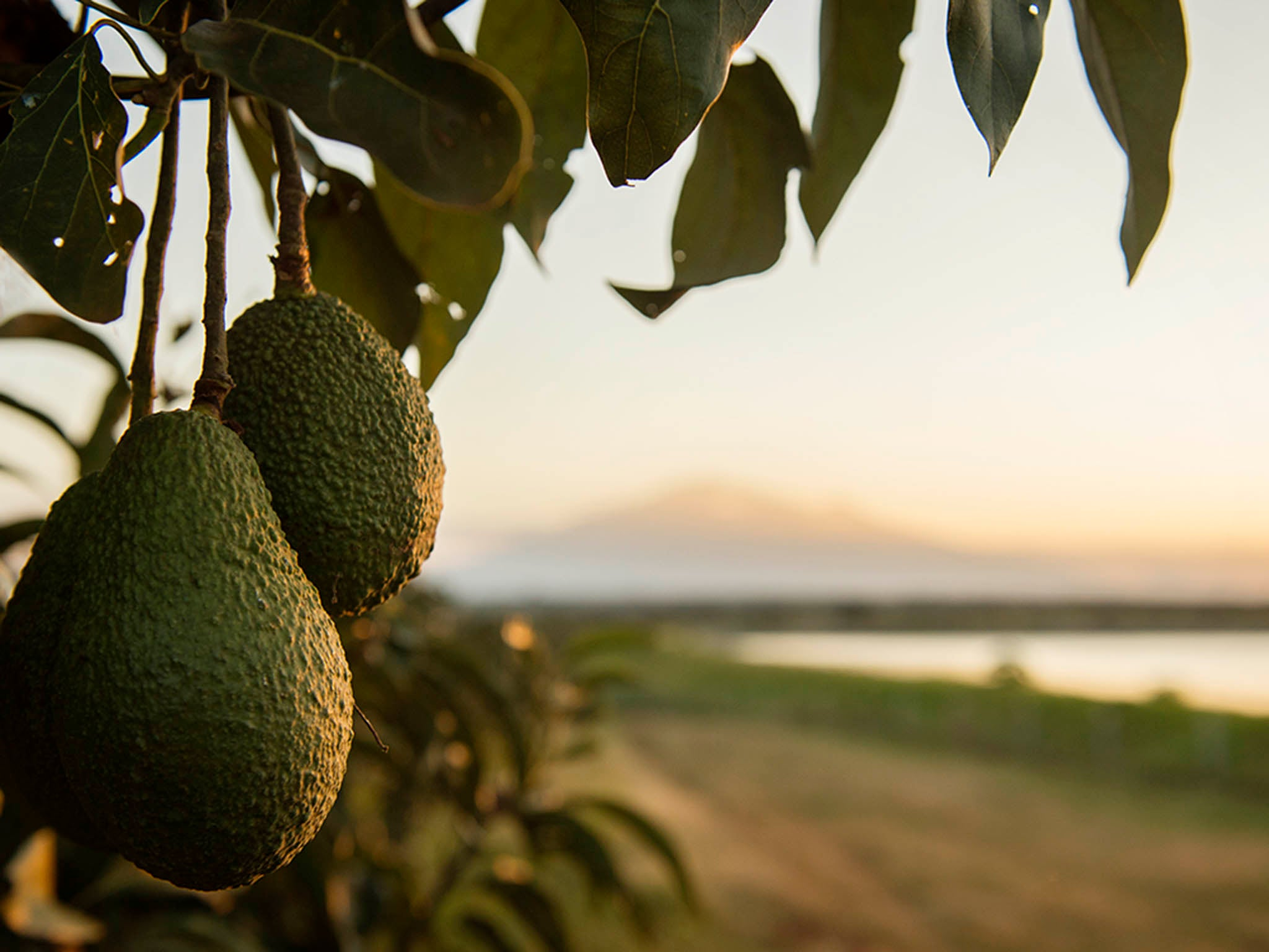 Avo-can-do: How avocado farming is helping Tanzanian