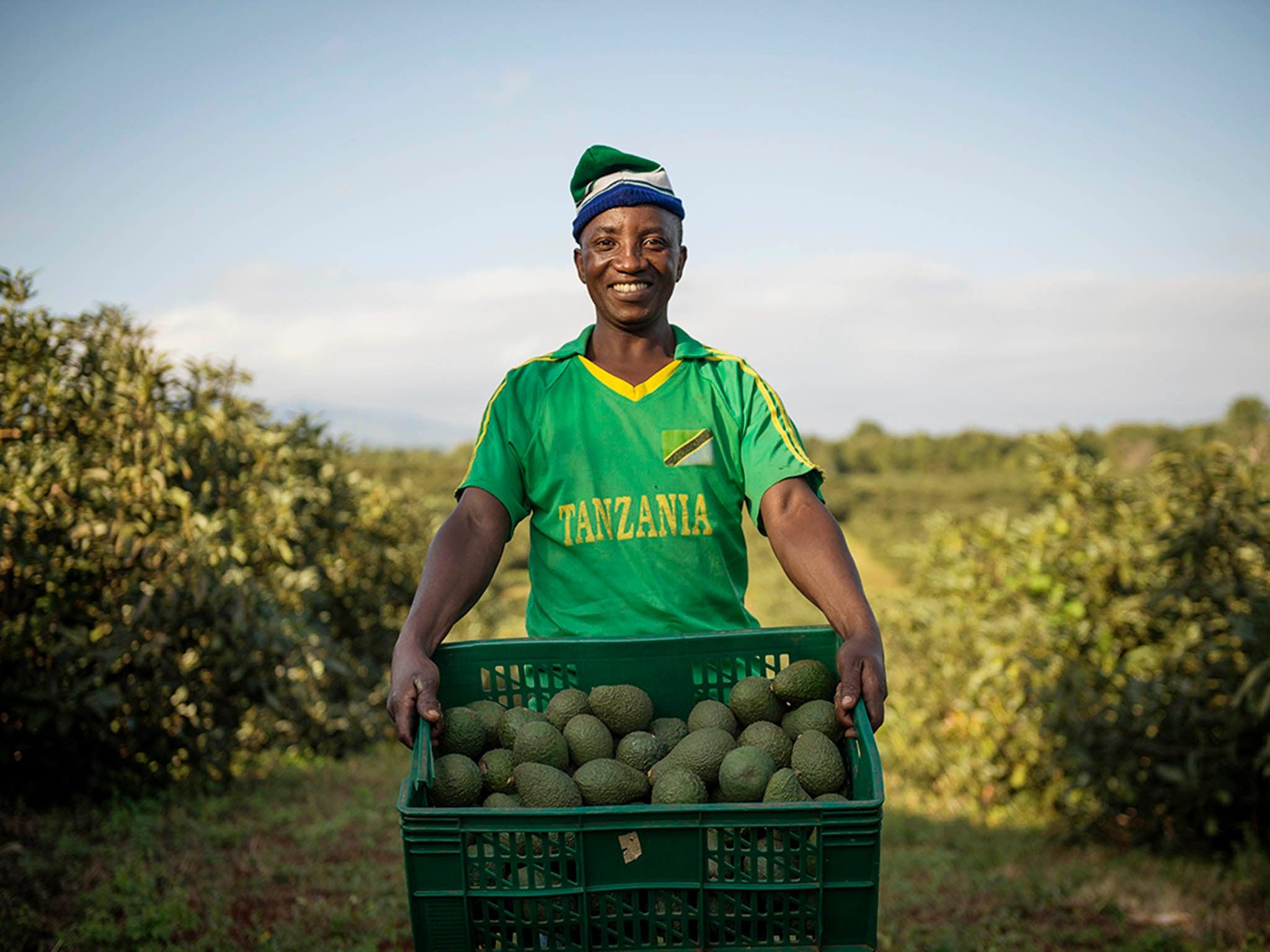 Avo-can-do: How avocado farming is helping Tanzanian communities flourish 1