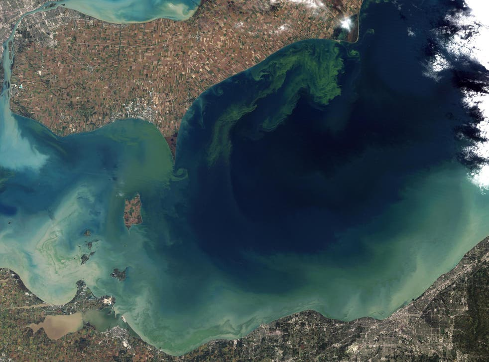 Some scientists say fertilising the ocean could destroy delicate ecosystems. Pictured is an algae bloom in Lake Erie