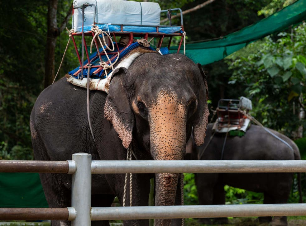 An elephant is allowed to carry only 10 percent of its body weight, according to Travelife guidelines
