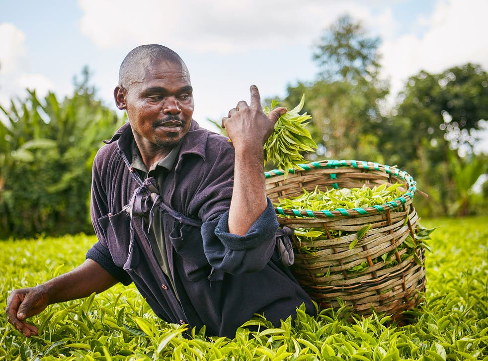Festus Mugambi Mimuga: 'I've seen a lot of difference from doing this. Our soil has started to get better'