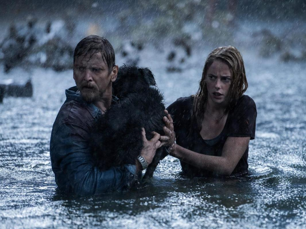 Crawl: Alligator thriller produced by Sam Raimi could be sleeper hit of summer