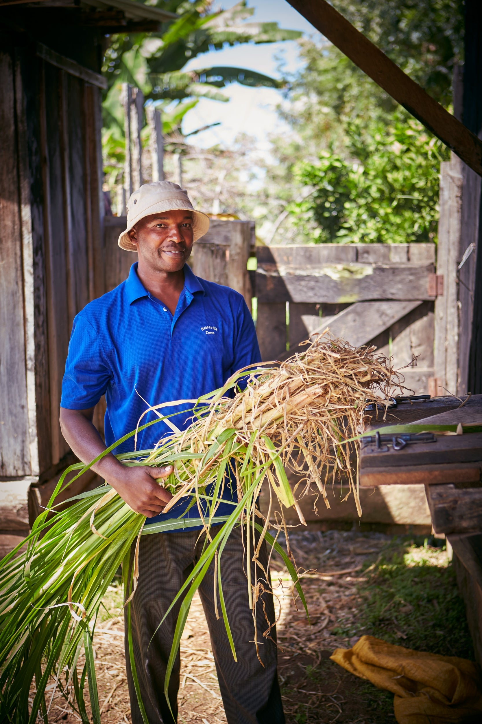 Prehistoric plants reproduce in UK for first time in 60m