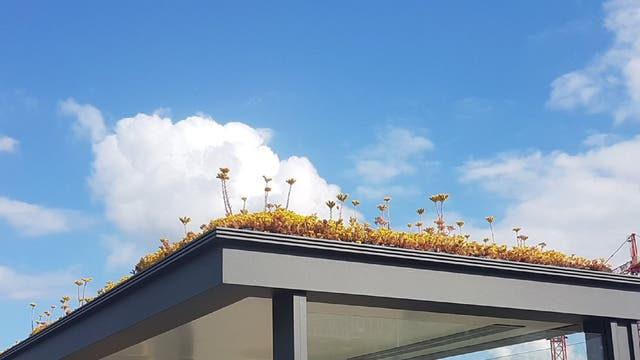 More than 300 bus stops in the Dutch city of Utrecht have had their roofs transformed by plants to help biodiversity such as honey bees and bumblebees