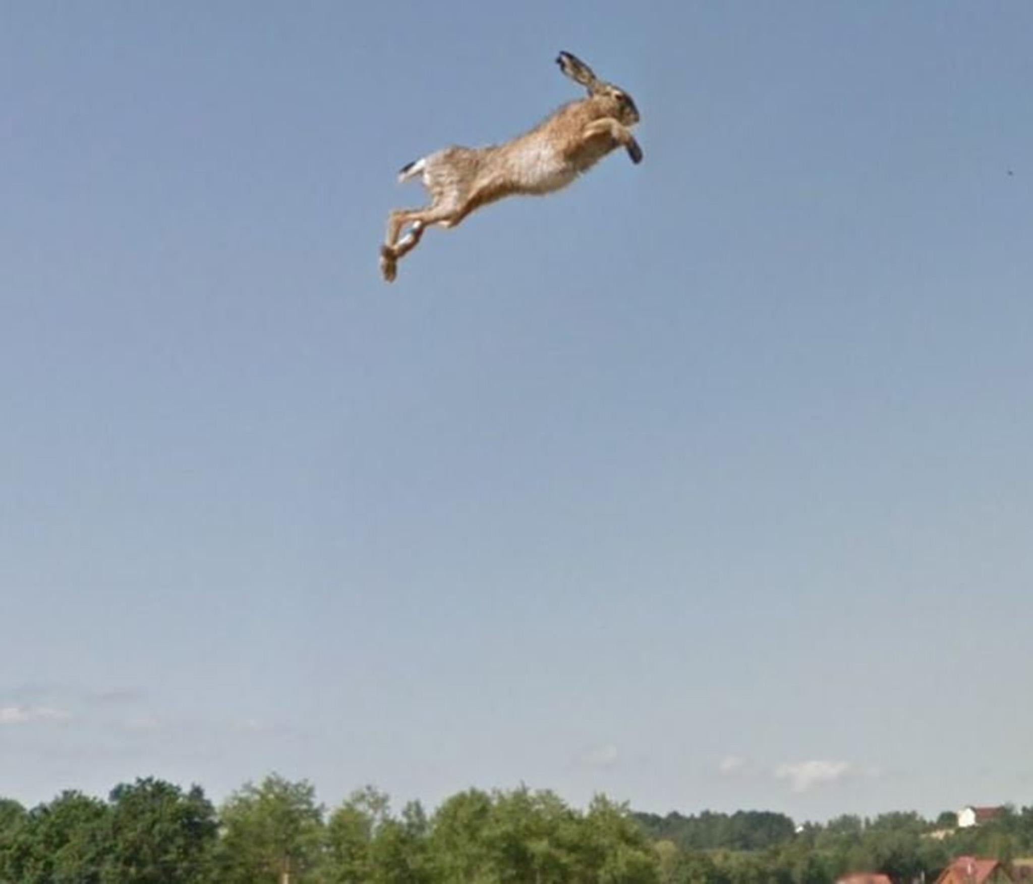 Google Street View Car Sends Hare Flying Across Road After