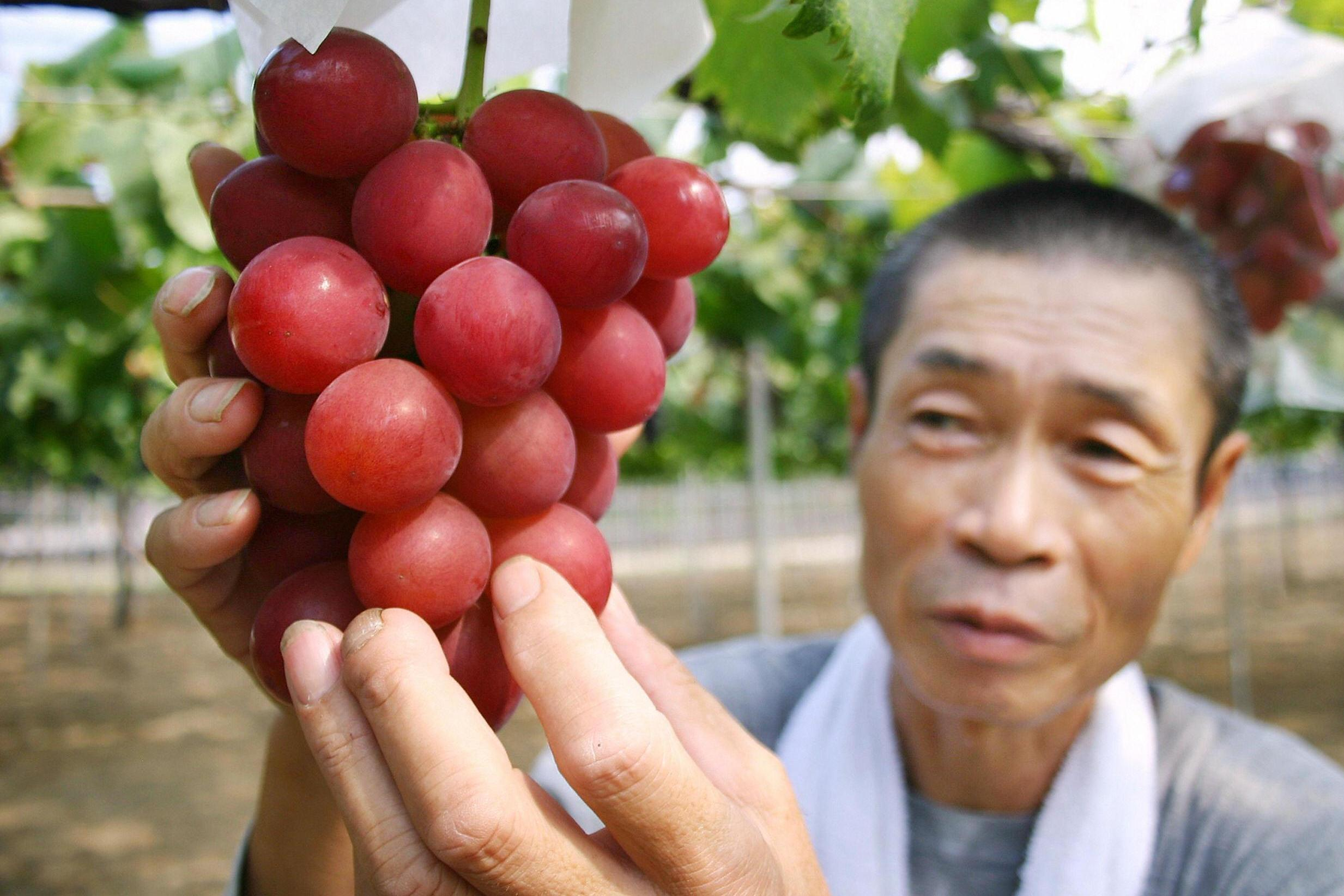 Bunch of Ruby Roman grapes sells for £8,800 in Japan 1