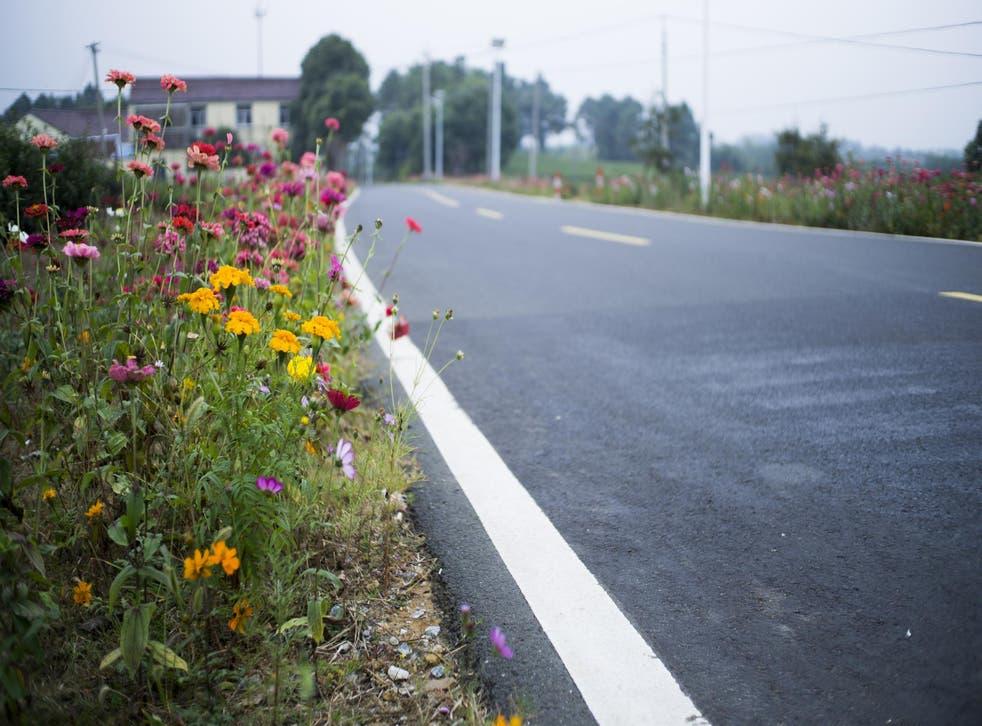 Wildflower meadows on roadsides are saving Britain's wildlife
