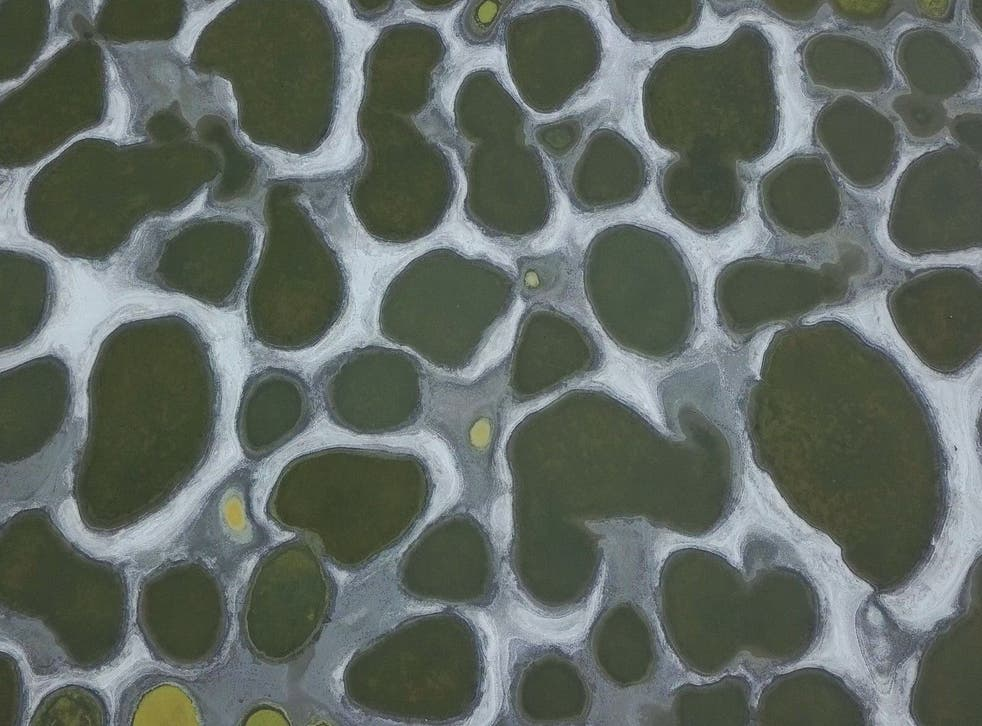 Canada's Spotted Lake is the ultimate lunar landscape