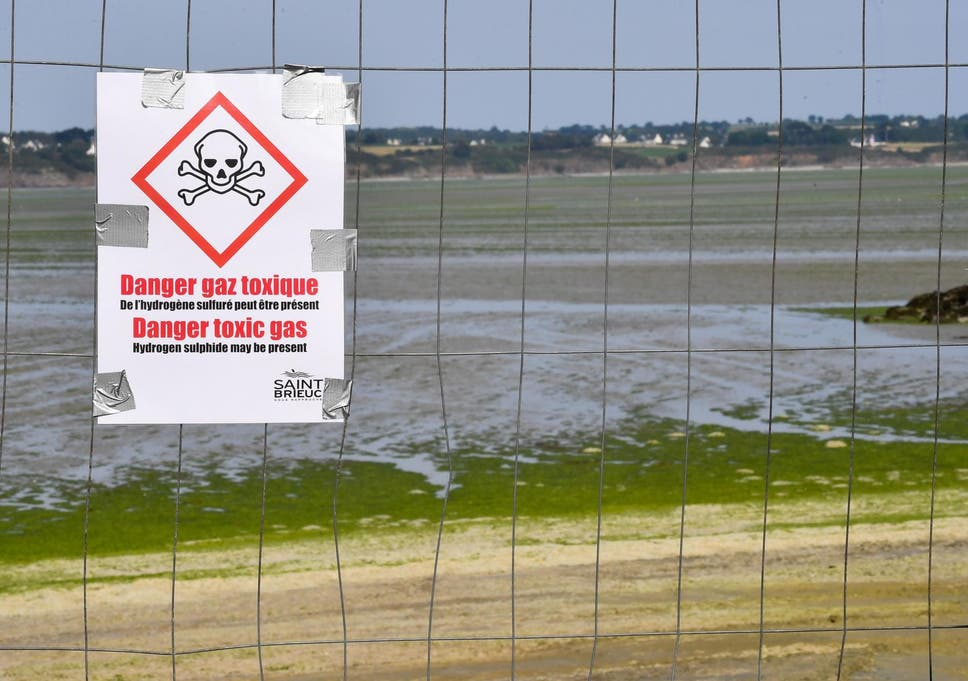 British tourists warned to avoid 'killer seaweed' in France