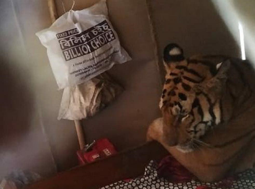 A Bengal tiger was found lying on a bed inside a house as it sheltered from flooding at nearby Kaziranga National Park during a monsoon in Assam, India, 18 July 2019.