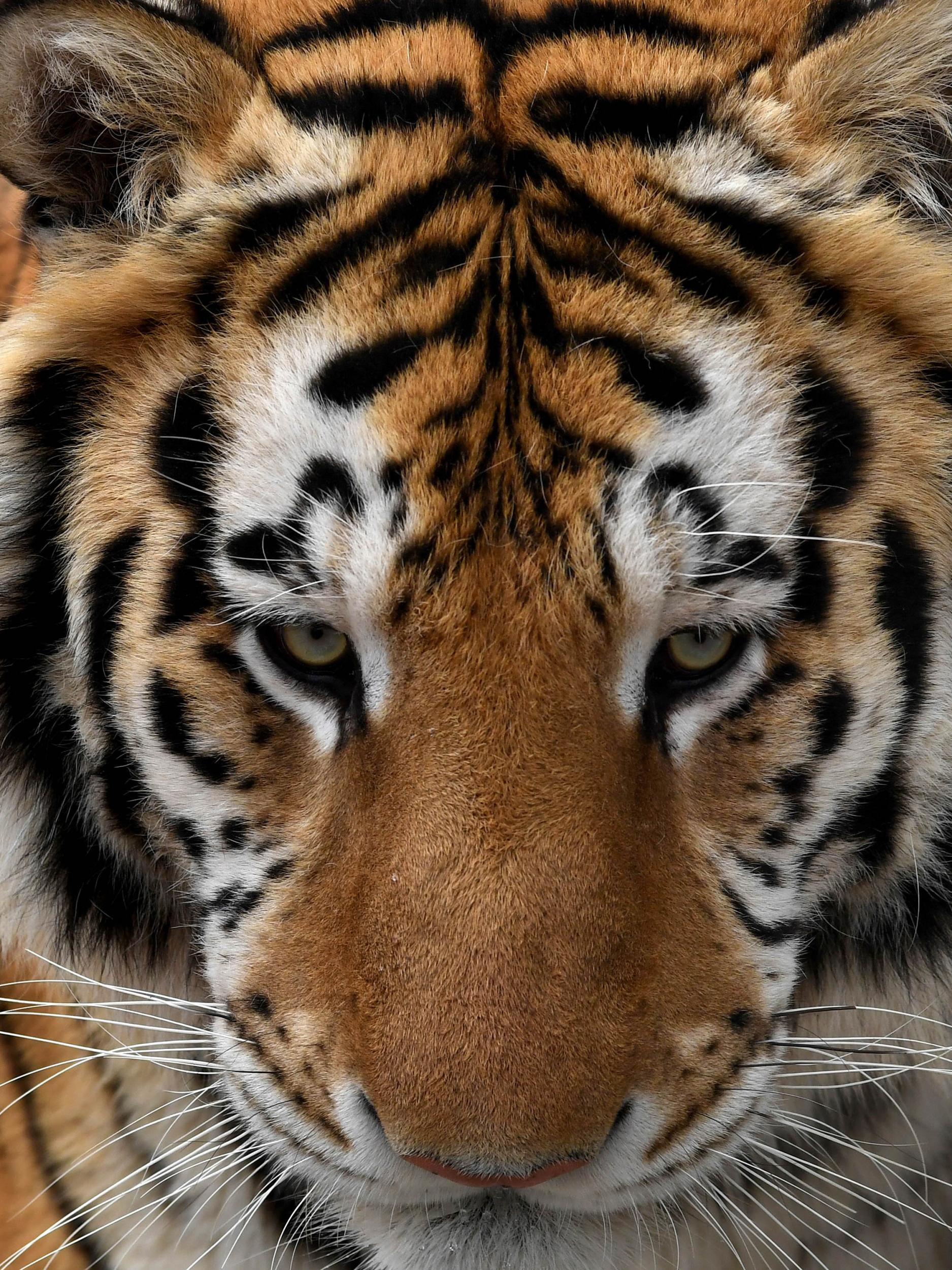 The problem with exotic animal ownership in America | The Independent