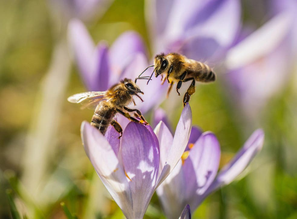 'Each was going about its own business, seemingly ignorant of the many competitors for the hebe's pollen'
