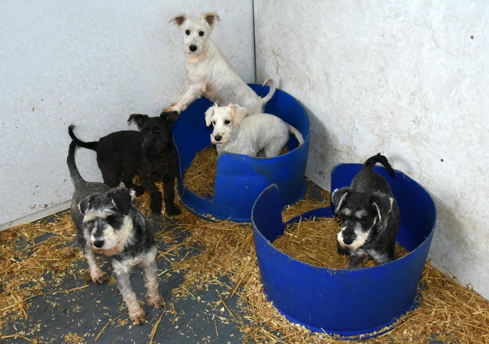 f8a39b541a3f Owners of 'largest puppy farm in Scotland' who burnt dog corpses in van  convicted of animal cruelty
