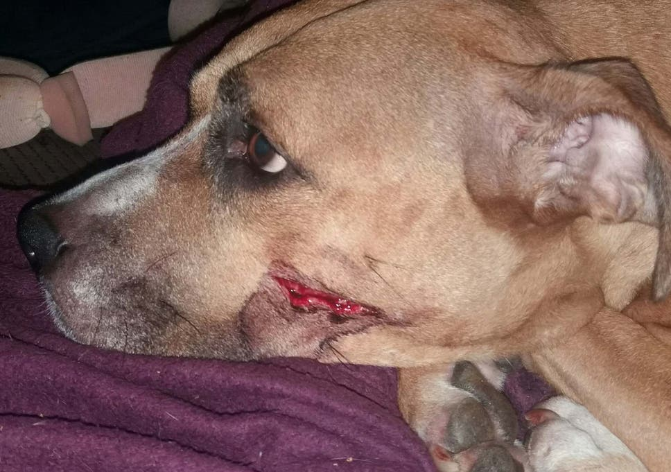 Zena was injured with a machete during the robbery at a flat in Manchester