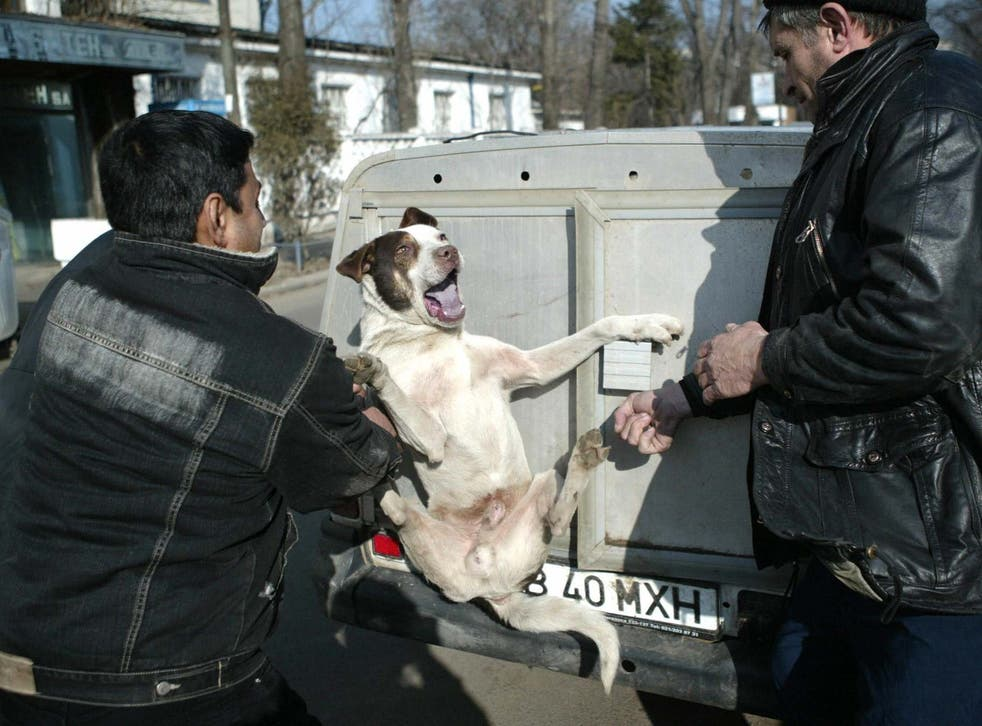 In Romania, it's 'normal' to see homeless animals being abused or killed