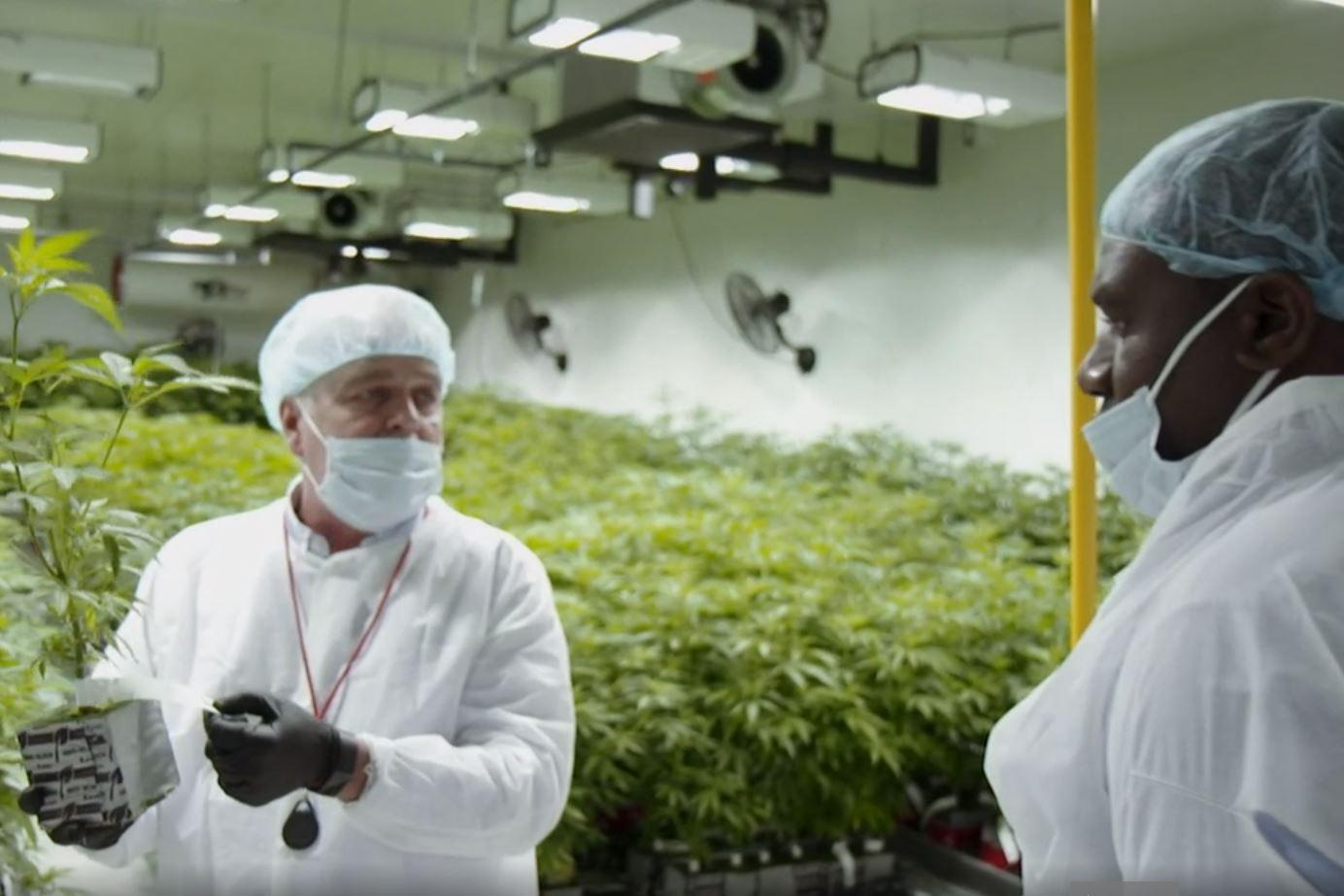 Cannabis to be 'fully legal in UK within years'