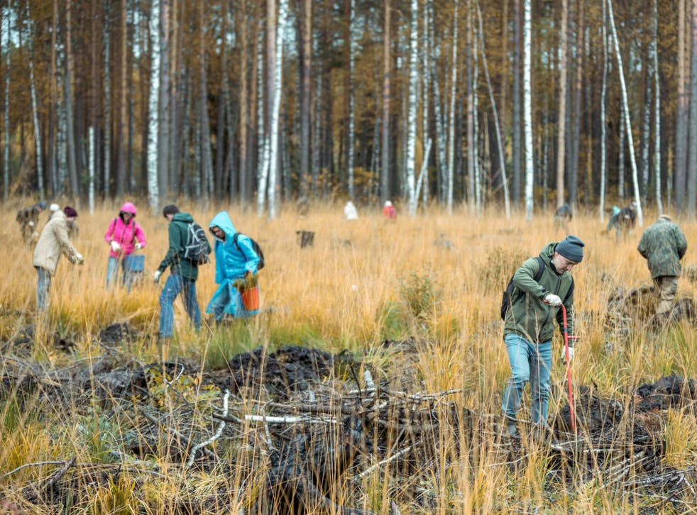 Last year the UK planted just 13,400 hectares of woodland, the majority of which was in Scotland