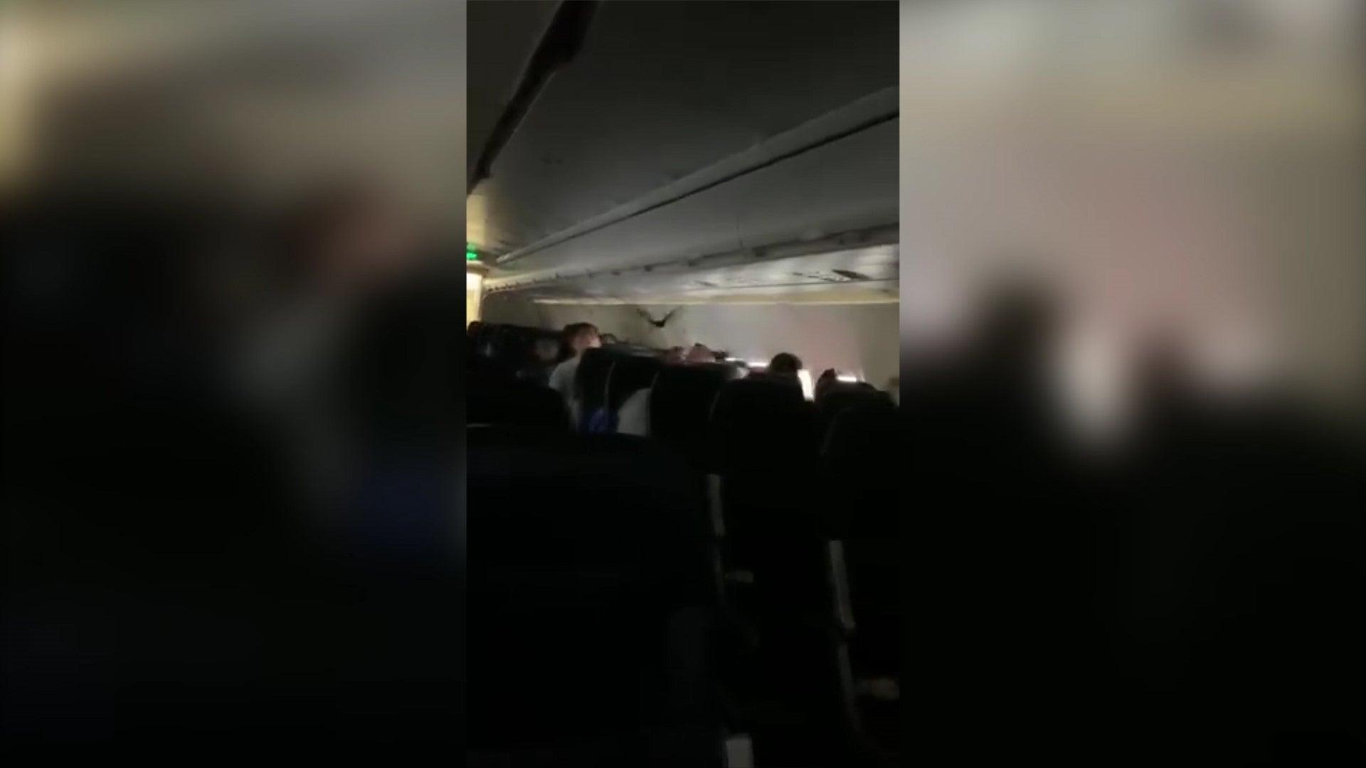 Bat terrifies plane passengers when discovered mid-flight
