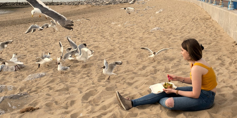 Scientists have figured out how to stop seagulls nicking your food