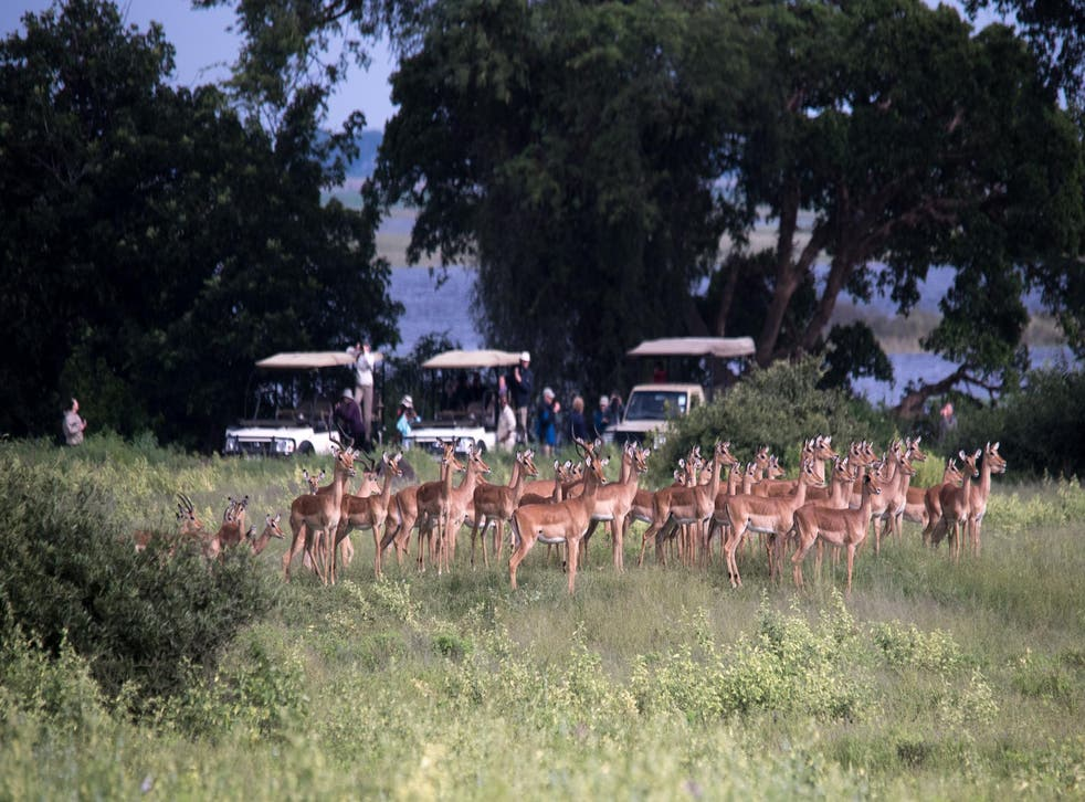 Most tourists visit sub-Saharan Africa to see wildlife