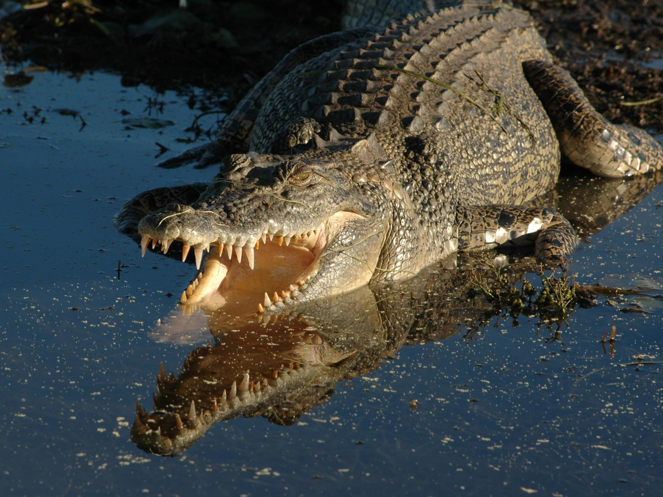 Crocodile eats 10-year-old boy alive in front of his siblings