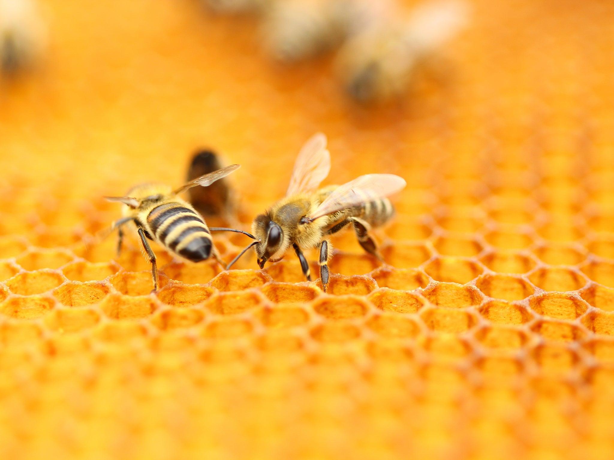 Why is beekeeping booming in Berlin?