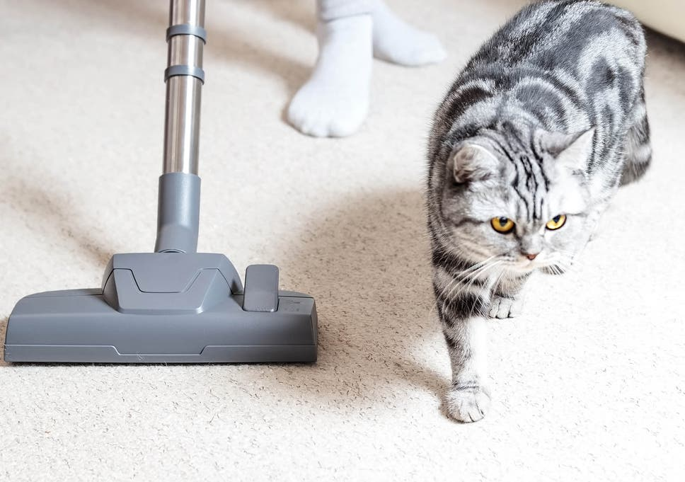 11 best pet vacuum cleaners | The Independent