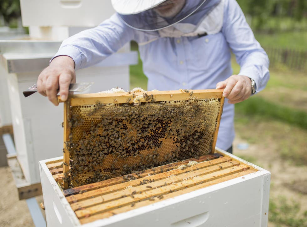 File image of bee hive.