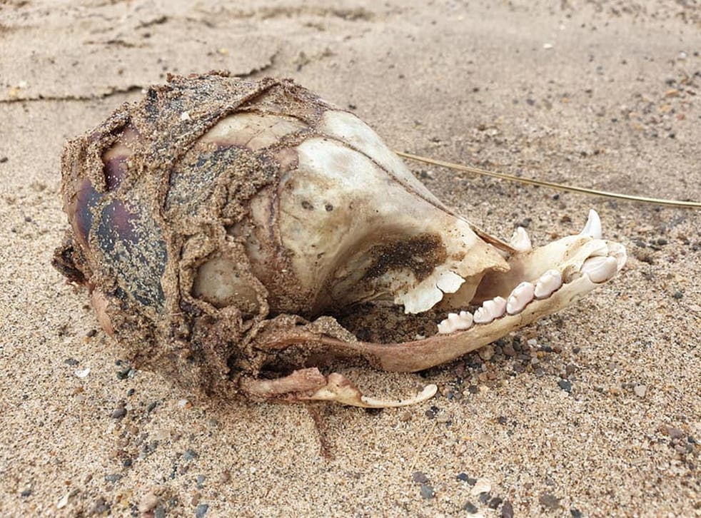 What is this mystery skull found on a Lincolnshire beach?