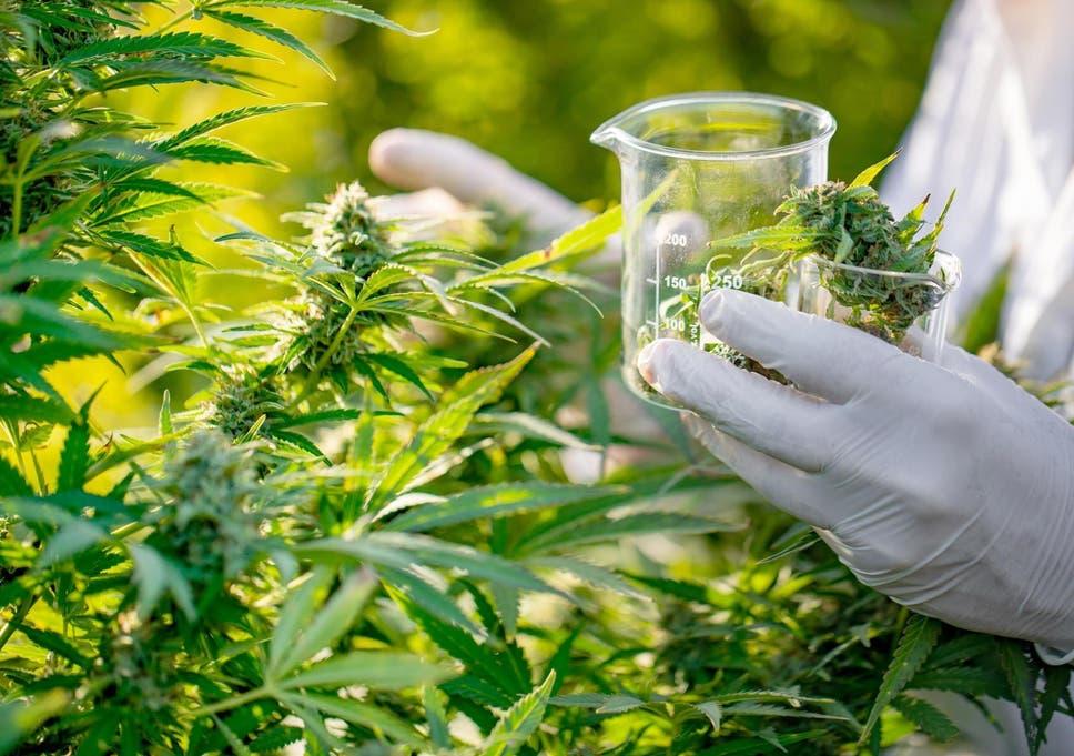 Cannabis chemical may help treat pancreatic cancer, study