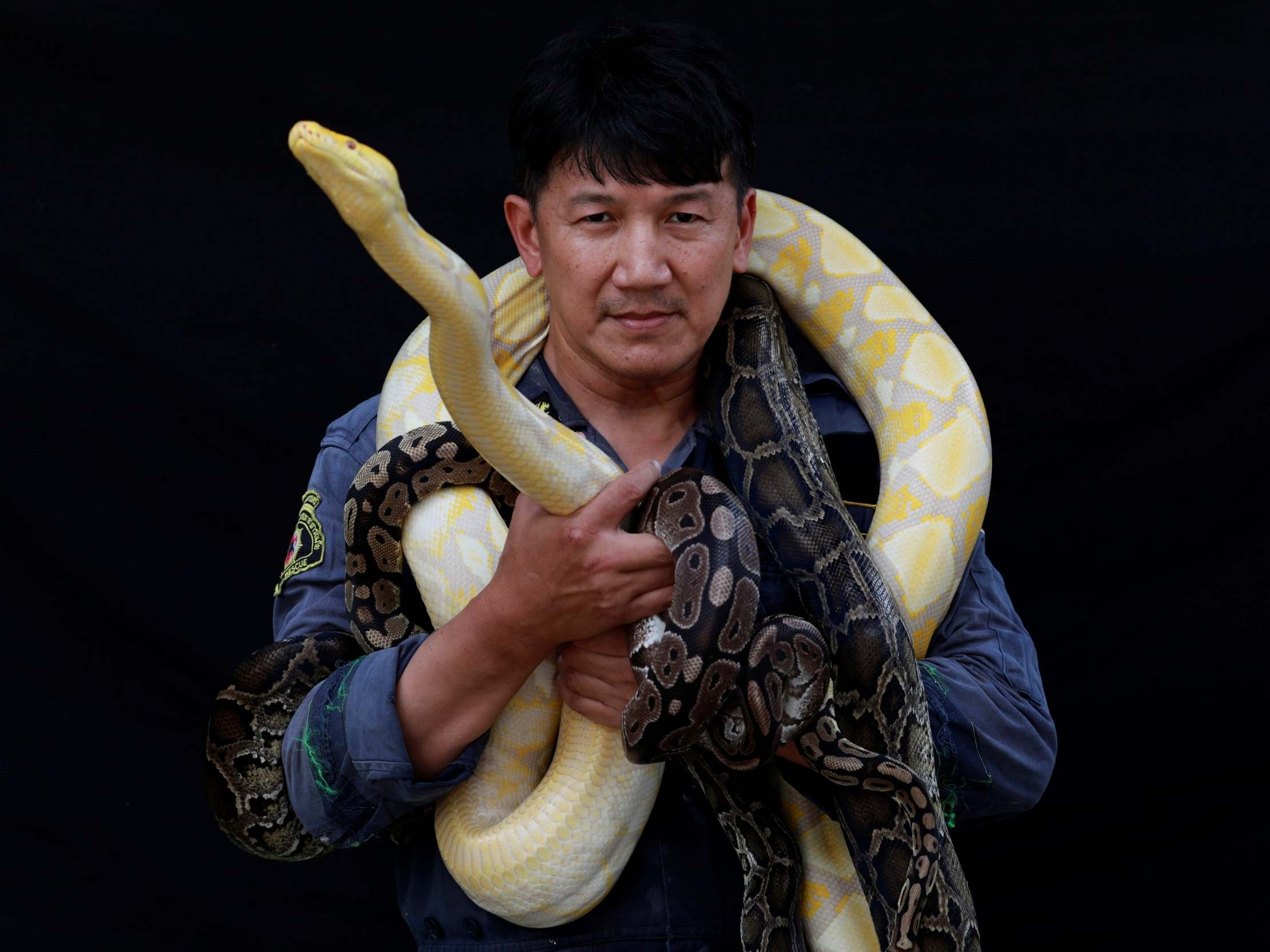 Snakes - latest news, breaking stories and comment - The