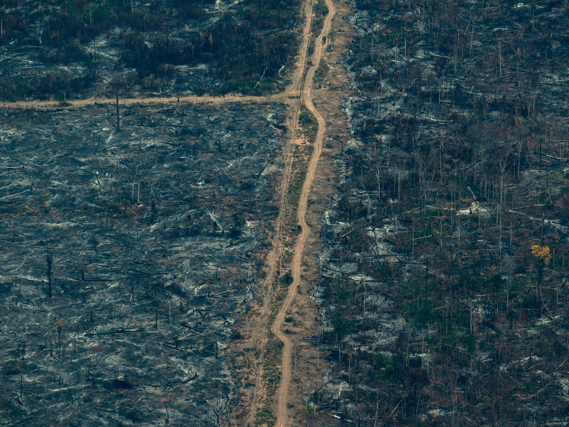 The Amazon rainforest is burning, but it is food price