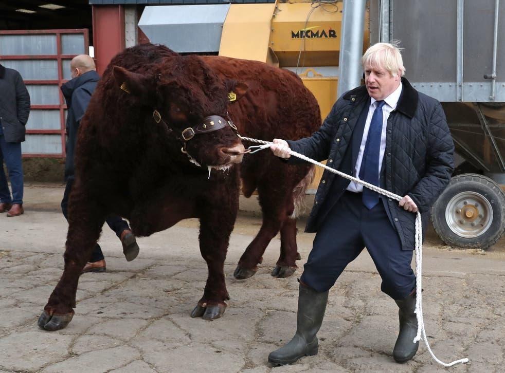 Boris Johnson trying to manage a bull at a farm near Aberdeen.