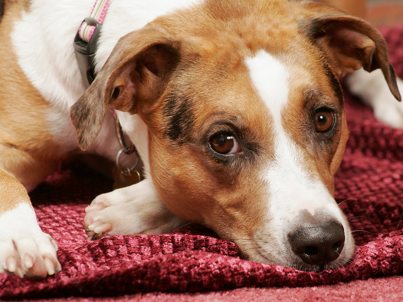 Dogs - latest news, breaking stories and comment - The