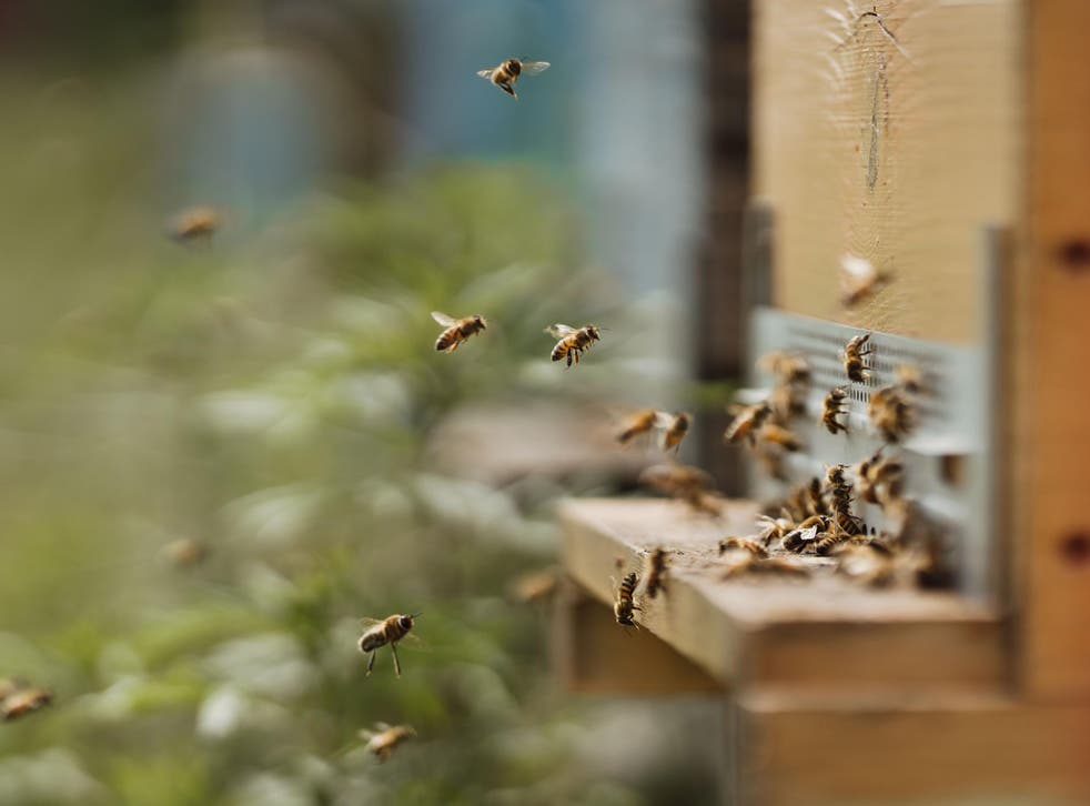 Hives that better mimic trees where bees nest will help their population numbers