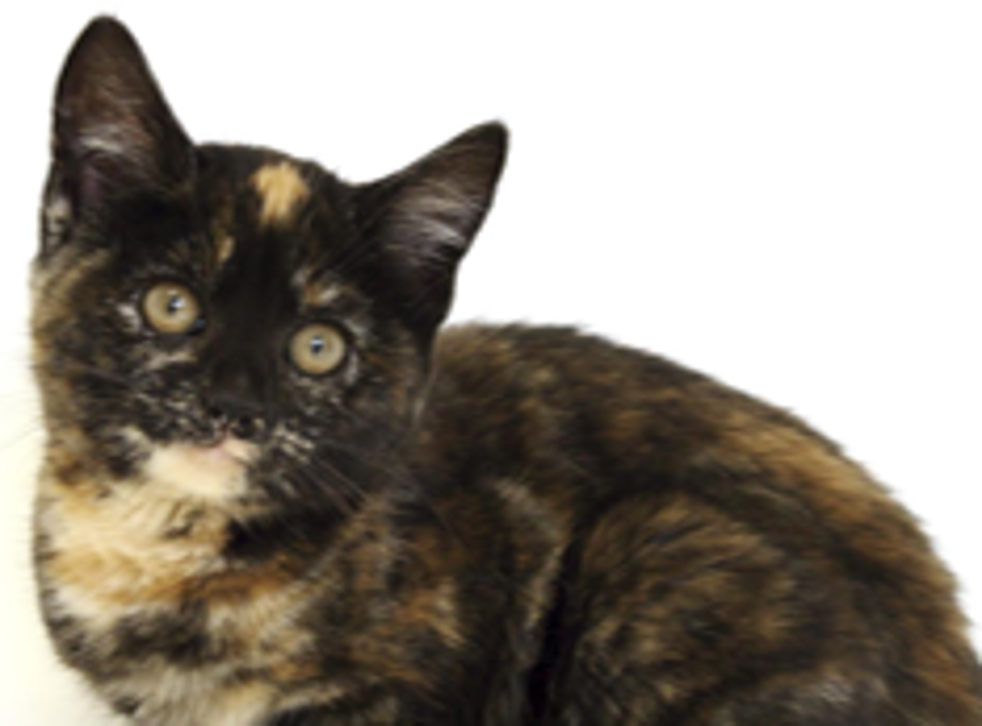 Stock image of a kitten, similar to the one that was thrown onto a carriageway outside of York