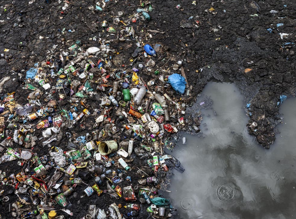 Exposure to plastic bottles and carrier bags caused earthworms to lose 3.1 per cent of their weight over a 30-day period (file photo)