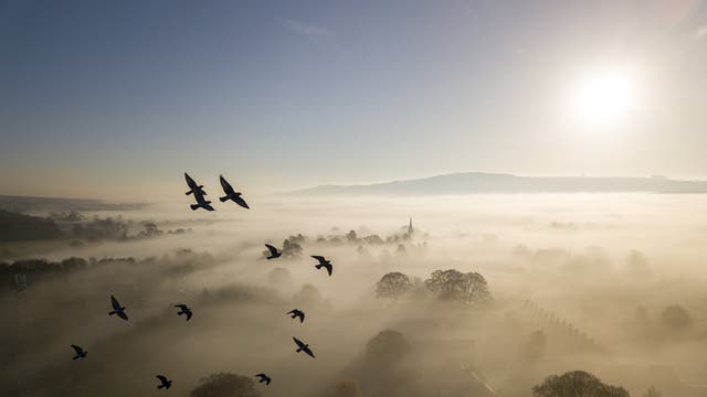 Flock of rock doves flying near Burley in Wharfedale, West Yorkshire