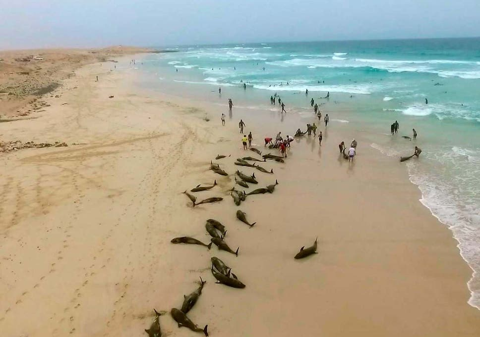 Authorities in the Cape Verde islands are waiting for experts from Spain to help discover why the dolphins washed ashore