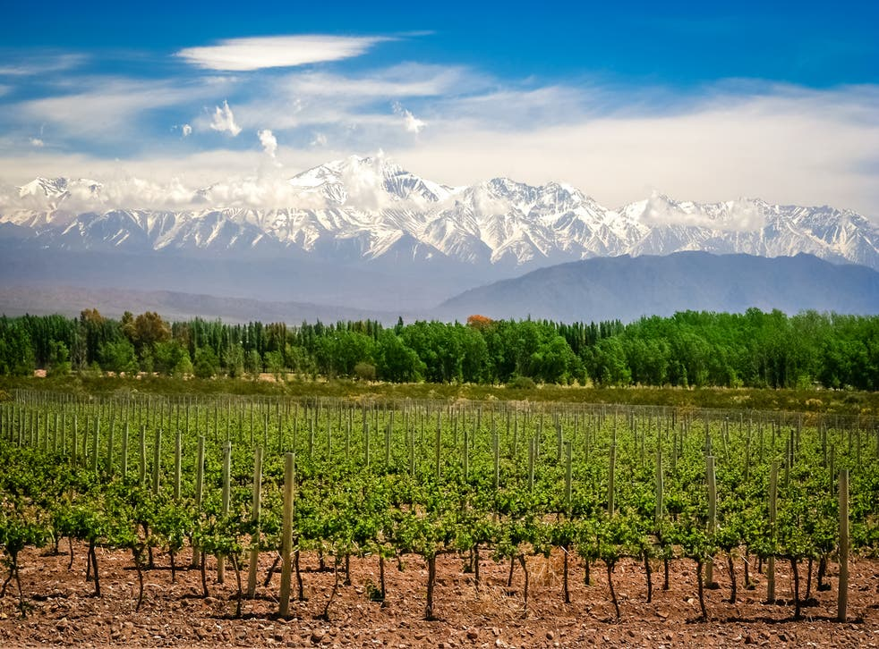 The area is known for its organic vineyards