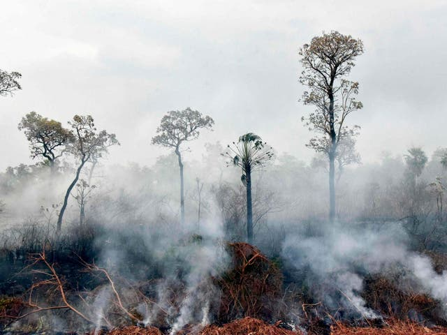 Wildfires rage in the Amazon - but with no shortage of fingers pointing the blame, who is responsible?