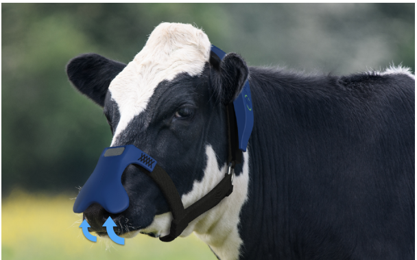 Burping cows: Should we be prolonging or eliminating livestock farming?