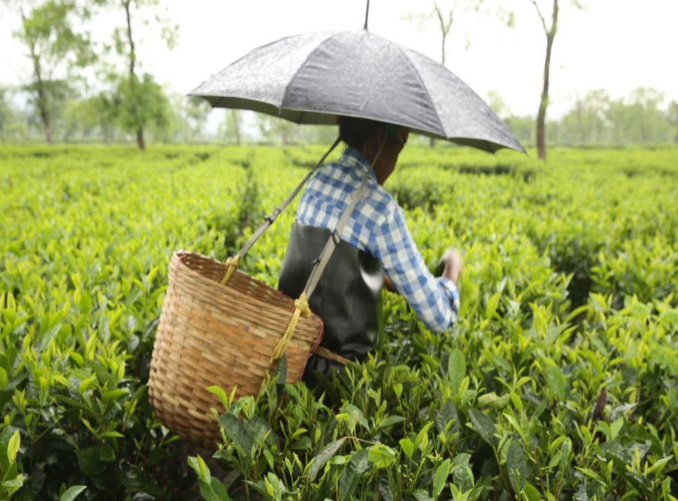 """Women working on tea plantations in Assam regularly clock up 13 hours of """"back-breaking"""" work a day, Oxfam said."""