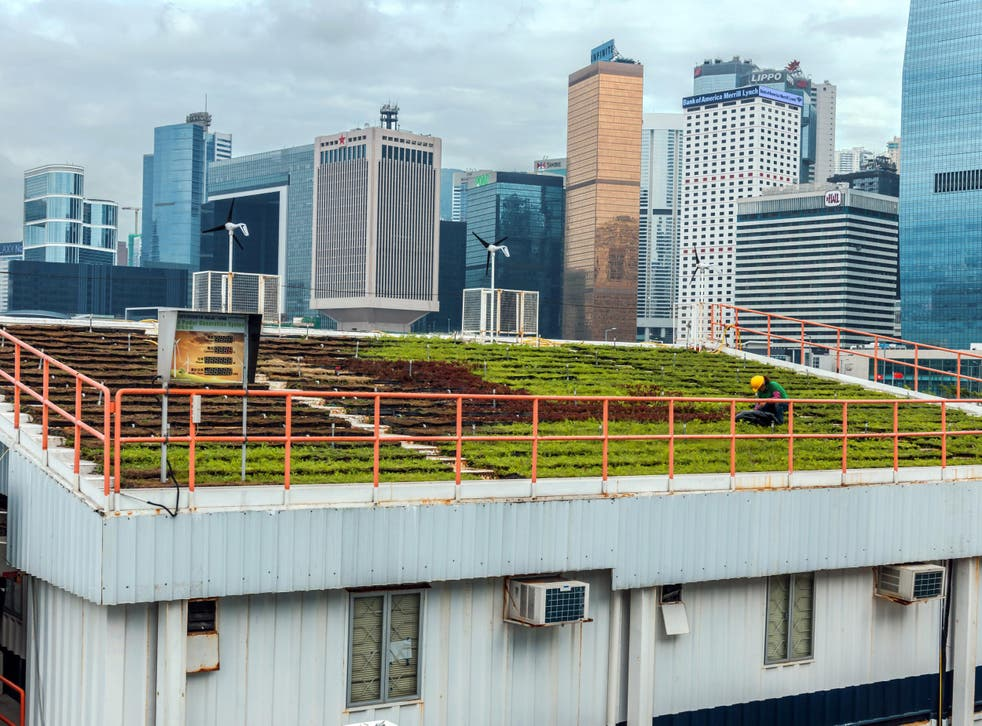 A green roof used for farming in front of the Hong Kong skyline