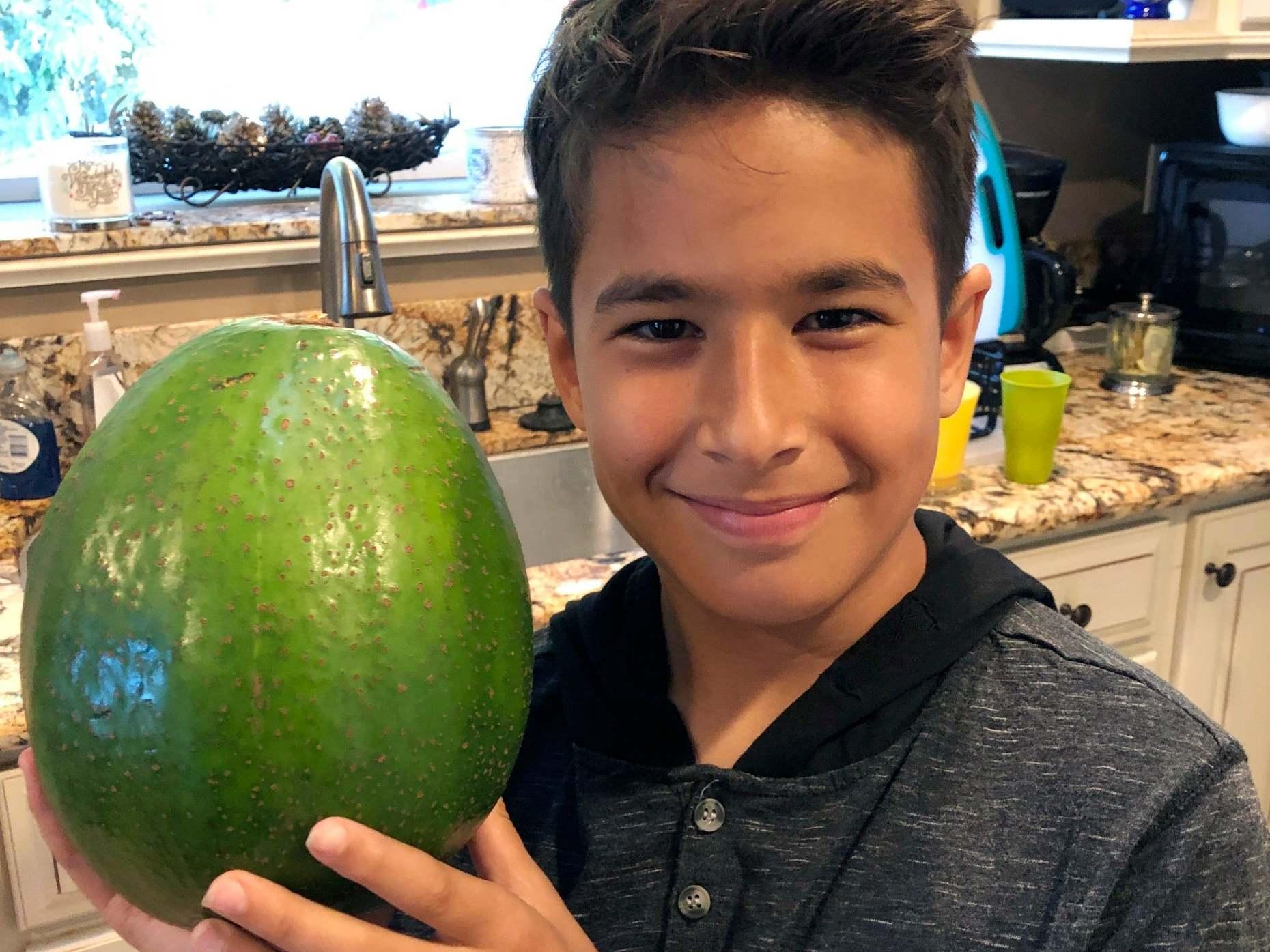 Massive avocado wins record for world's heaviest in Hawaii