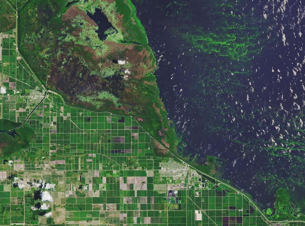Toxic algal blooms resulted in states of emergency being declared in Florida in 2016 and 2018. Pictured is Lake Okeechobee